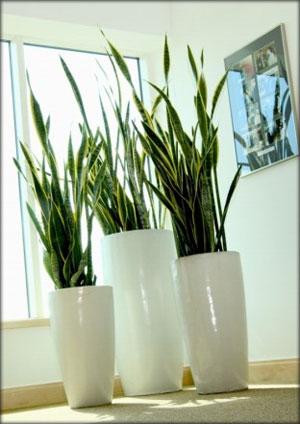 Recomendaciones para plantas bajo sombra vivero las for Decoracion de oficinas con plantas